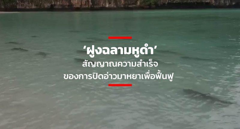 Thumbnail for Web_Thumbnail for Web-06 (1)