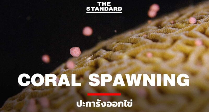 Coral-Spawning