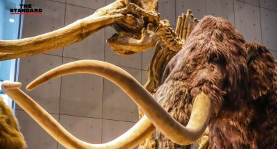 Japanese Scientists bring woolly mammoth cells back to life