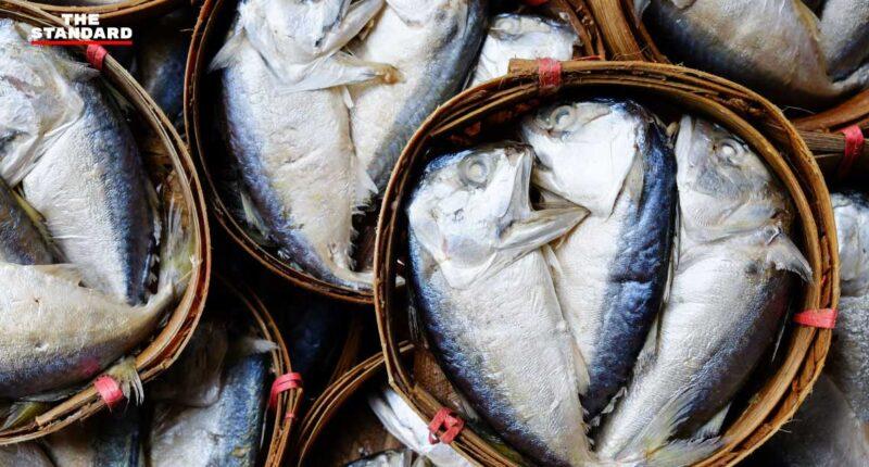 ปลาทูไทย