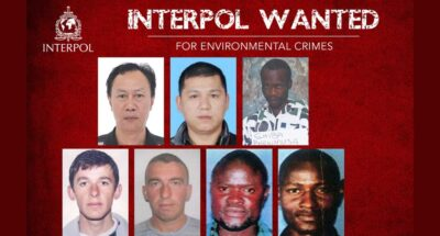 interpol wanted for environment crimes