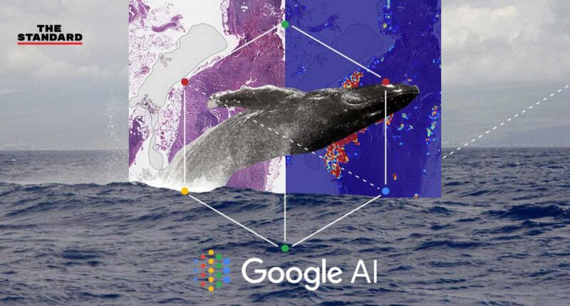 Google Solve with AI