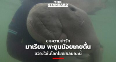 mariam orphaned-baby-dugong