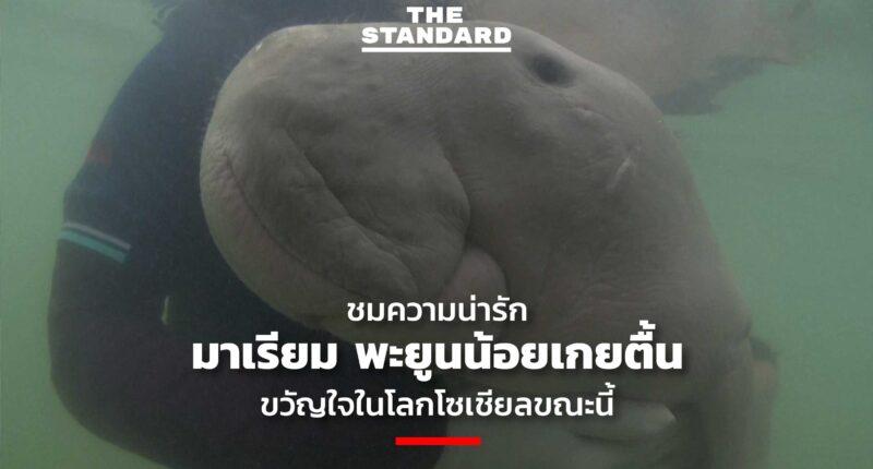 mariam orphaned-baby-dugong