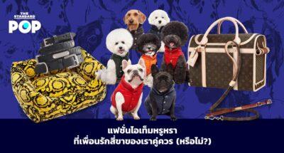 Dog Fashion Items