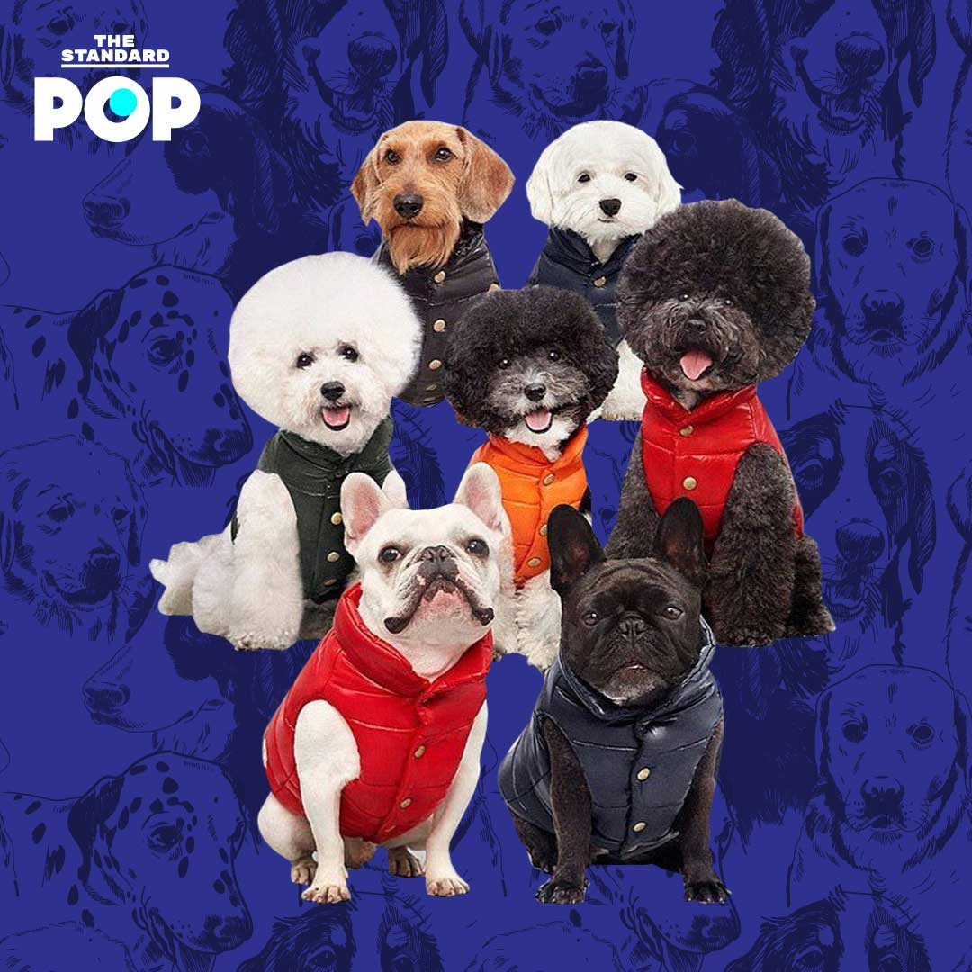 Dog Fashion Items