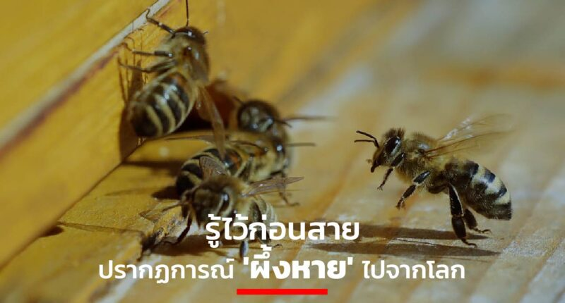 Bees Earth's ecology