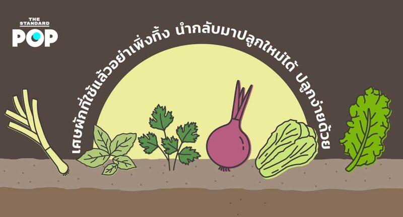 การปลูกผักสวนครัว