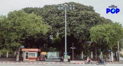 ปู่ต้นไม้