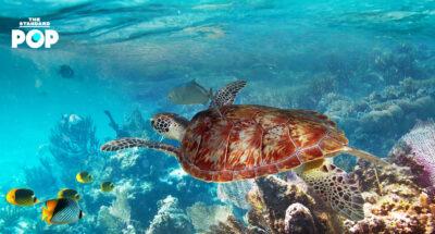 เตรียมชุดว่ายน้ำให้พร้อม หมู่เกาะสิมิลันเปิดเกาะให้เที่ยวแล้ว