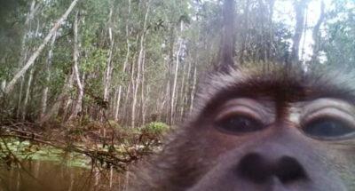 ลิงแสม ลิง