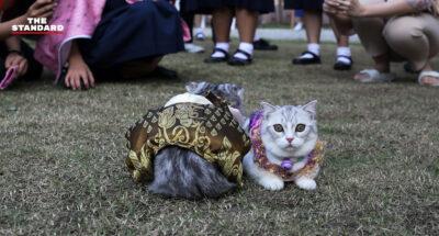 บรรยากาศเทศกาล The Cat Society 'รวมพลคนหลงแมว' เมื่อมิวเซียมสยามถูกเนรมิตเป็นดินแดนของทาสแมว