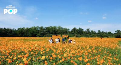 Jim Thompson Farm เที่ยวแบบ Agro-tourism | ชมทุ่งดอกไม้ | เปิบอาหารอีสาน
