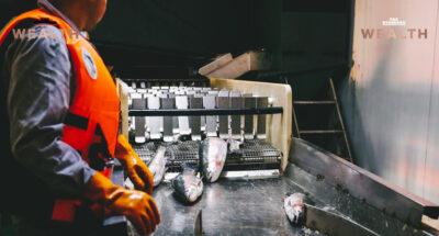 ผ่าภารกิจสิงคโปร์สร้างตึก 8 ชั้นทำ 'ฟาร์มปลา' แดนเมอร์ไลออนมองเห็นอะไรในอนาคตด้านอาหาร