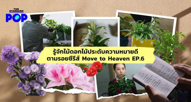 Move to Heaven ดอกไม้ ความหมาย