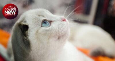 รัสเซียเริ่มผลิตวัคซีนป้องกันโควิด-19 สำหรับสัตว์ เป็นครั้งแรกในโลก