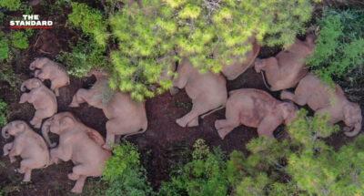 ช้างป่า ยูนนาน