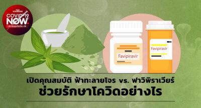 paniculata-vs-favipiravir